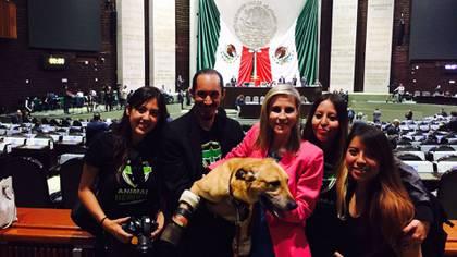 Fue el primer perro en ingresar a la Cámara de Diputados (Foto: cortesía Milagros Caninos)