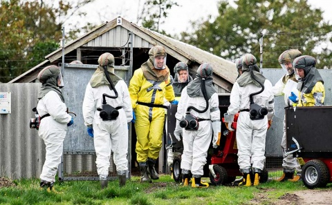 Dinamarca sacrificará a millones de visones por mutación de coronavirus